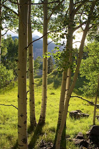 3136 V Aspen Telluride Art | Cunningham Gallery