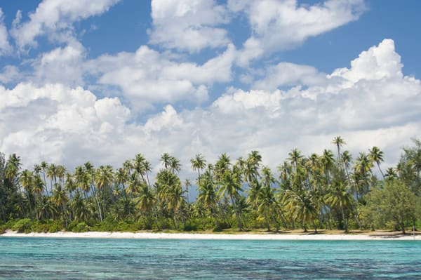 Aroa Point, Moorea, French Polynesia; palm trees and white sand beach, viewed from the shallow coral reef off Aroa Point