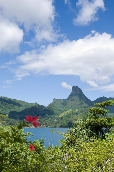 Moorea, French Polynesia; views of Cook's Bay from the home of the executive director of Gump Research Station, with Mount Mouaputa (830 m) in the background and red hybiscus flowers in the foreground