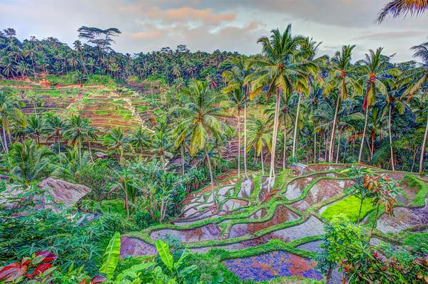 Ubud Rice Fields Photography Art | Zakem Art LLC