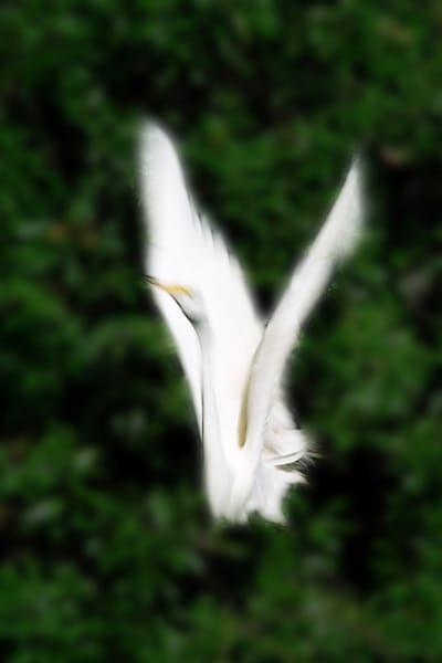 125-fuzzy-egret