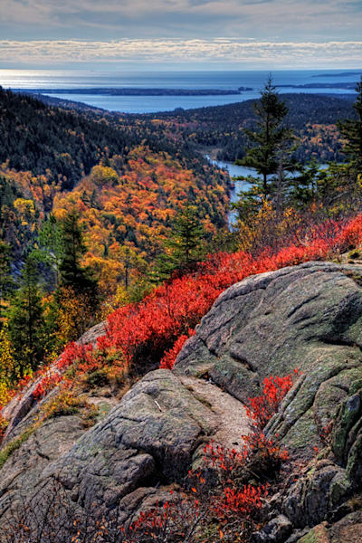 Acadia National Park 3008 Art | Cunningham Gallery
