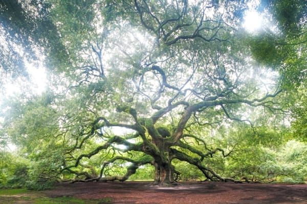 5067-angel-oak