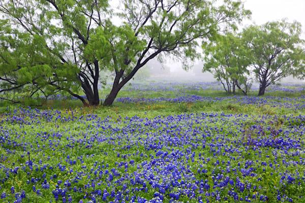 7840-blue-bonnets