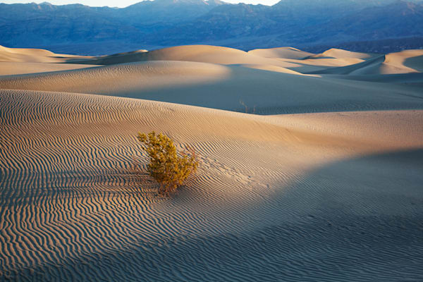 9661 Death Valley Dunes Art | Cunningham Gallery