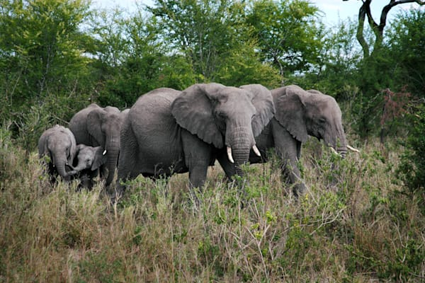 8971-elephant-group-tanzania