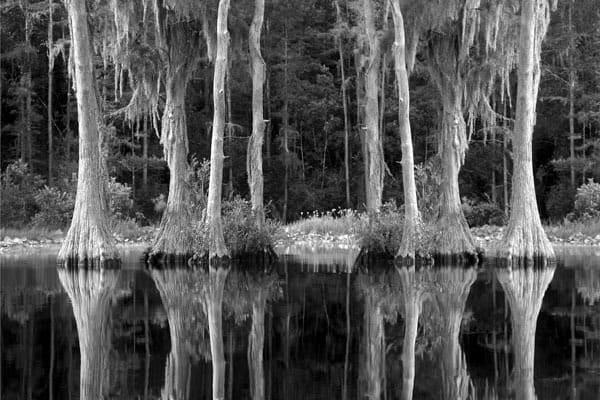 Okeefenokee Swamp Photography Art | Robert Jones Photography
