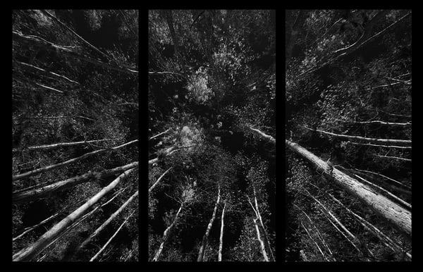 looking-up-ii-triptych