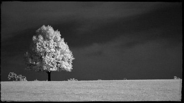 Solitude Ii Photography Art | Robert Jones Photography