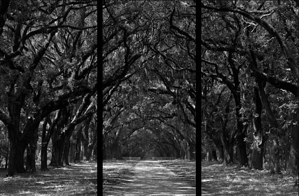 Wormsloe Plantation   Trip Tych Photography Art | Robert Jones Photography
