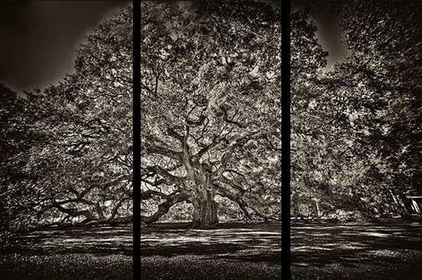 Angel Oak   Trip Tych Photography Art | Robert Jones Photography