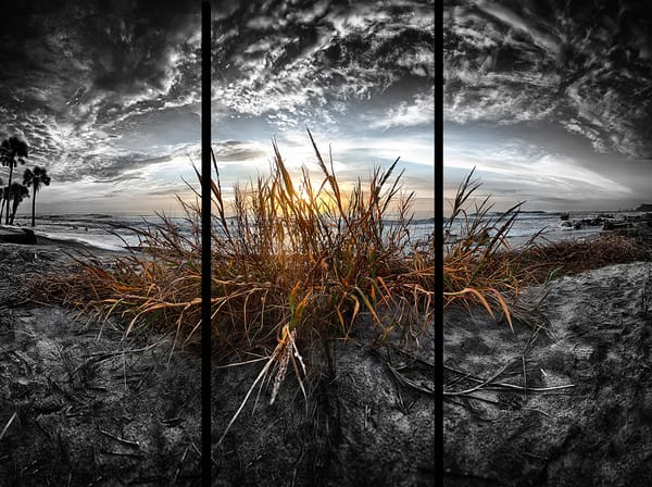 Sea Oats   Trip Tych Photography Art | Robert Jones Photography