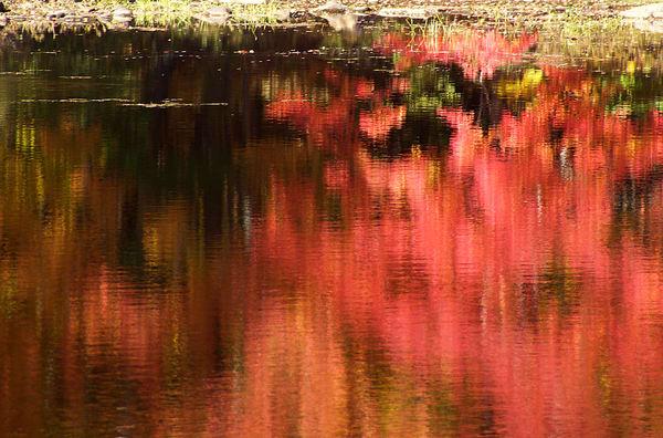 fall red foliage reflections