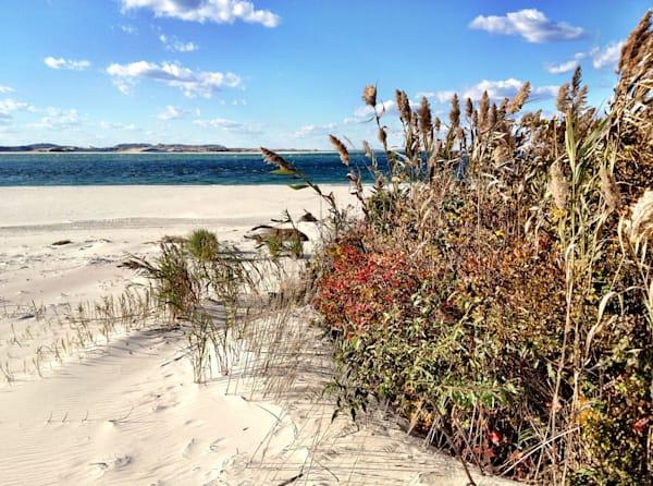 coffin's wingaersheek beach foliage seascape gloucester