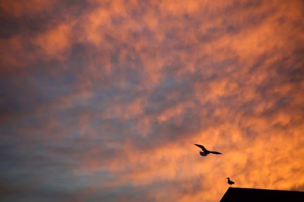 sunset sky clouds gull