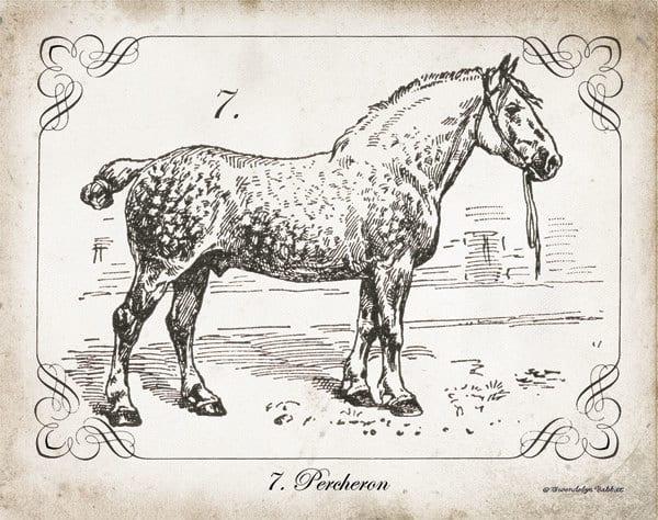 Farm Horse I