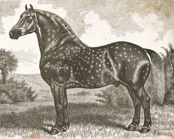 Horse Etching II