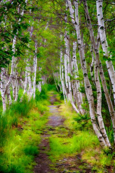 Sieur du Monts Path Fine Art Photograph | JustBob Images