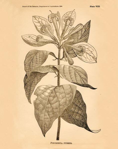 Vintage Botanical V