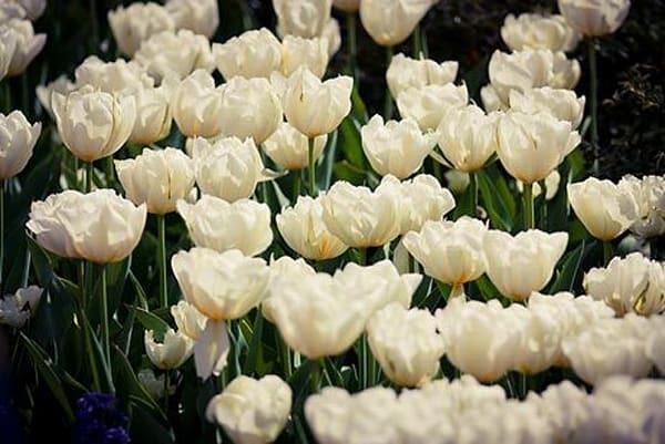 Vibrant Flowers XIV