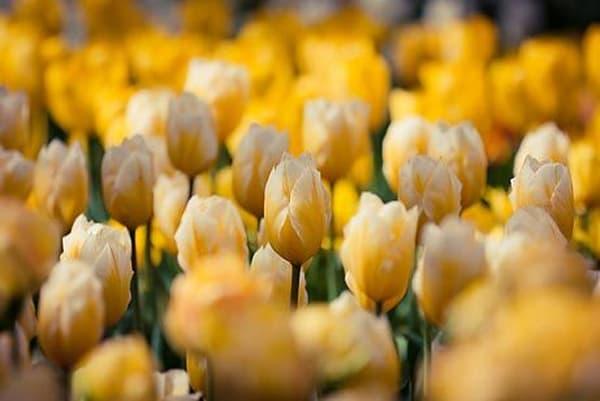 Vibrant Flowers XVII