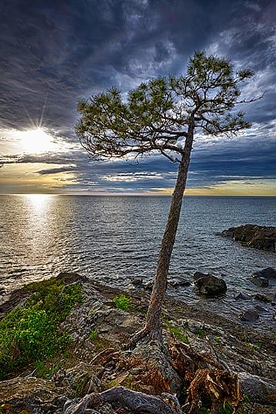 Wayside Tree Photography Art | Robert Jones Photography