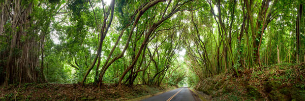 Hawaii Photography  |  Nuuanu Tree Tunnel by Douglas Page