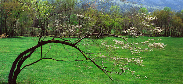 Dogwood Meadow