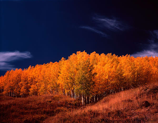 Aspen Grove Art | Fine Art New Mexico