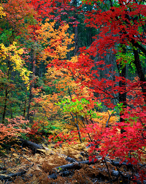 Fall Splendor Art | Fine Art New Mexico