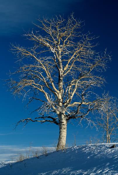 Highway 12, Utah; tree at overlook of Capital Reef National Monument