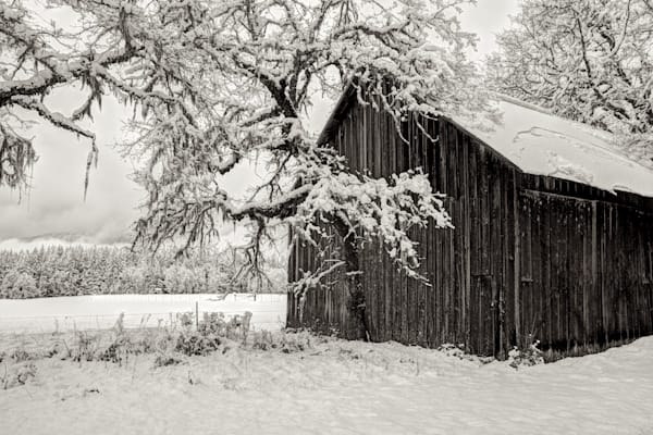 Snow Covered Barn and Branches