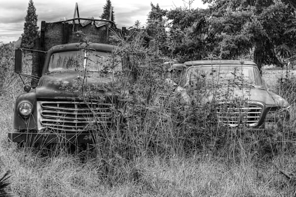 Old Studebakers in an Oregon field.