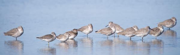 Shorebirds, Sanibel Island, Florida