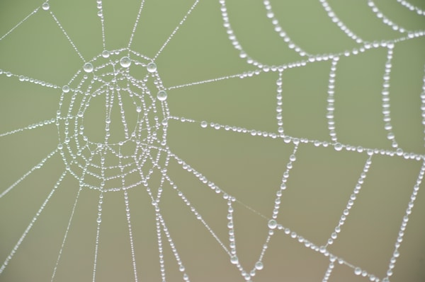 Spider Web Circle & Dew, Damon, Texas