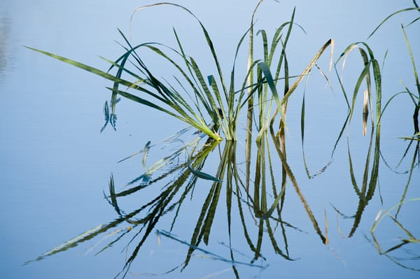 Reed Reflections, Damon, Texas
