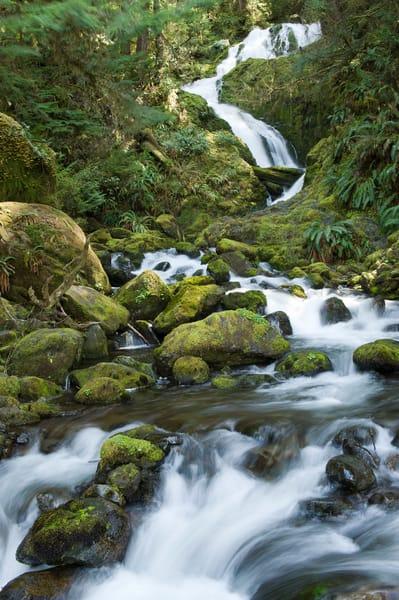 Bunch Creek Falls, Quinault Rain Forest, Washington