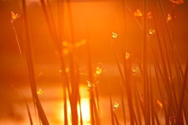 Dragon Fly Sunrise, Damon, Texas