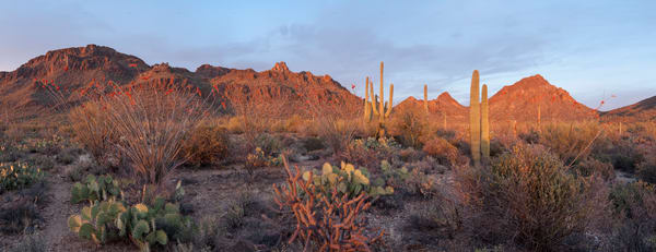Desert Sunset Pano, Tucson, Arizona