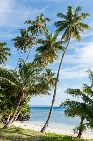 Palm Tree Beach, Taveuni, Fiji