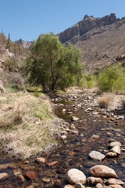 Sabino Creek, Sabino Canyon, Tucson, Arizona