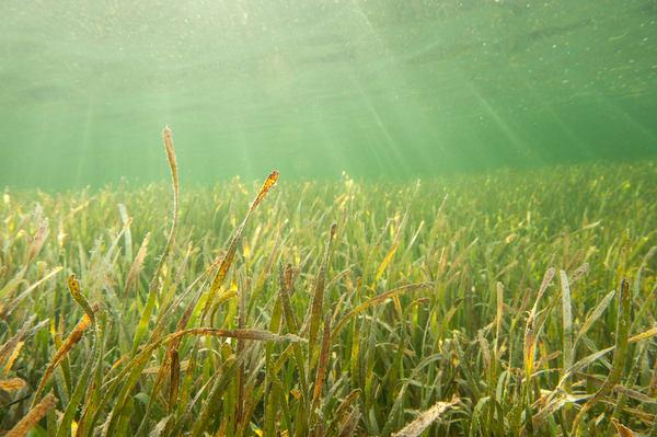 Sea Grass & Sun Rays, Gardens of the Queen, Cuba