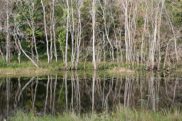 Forest Reflections, Damon, Texas