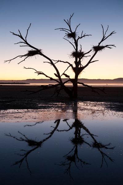 Bird Nests Sunset Silhouette, Salton Sea, California