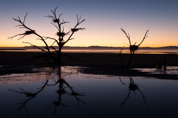 Bird Nests Sunset Silhouette, Salton Sea, California