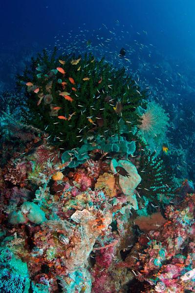 Coral Reef, Indonesia Art   photographicsart