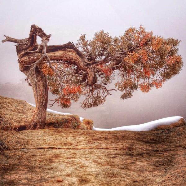 Strength Art | photographicsart