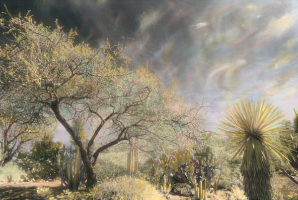 Desert Dreaming Art   photographicsart