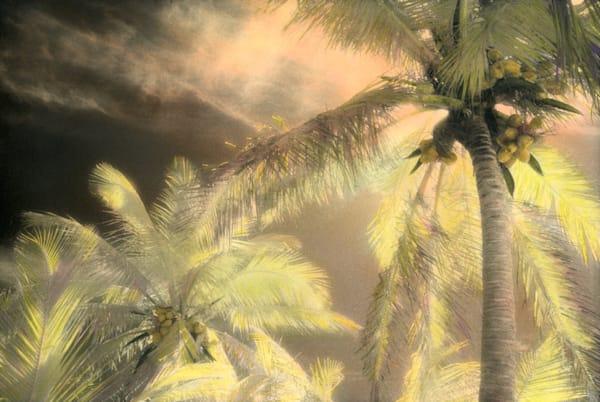 Palms, Sunrise Art   photographicsart