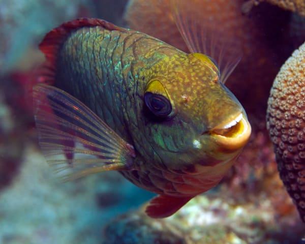 Smiling Parrotfish Art   photographicsart